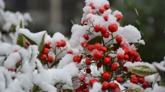 גלריית תמונות נאות מרדכי בשלג
